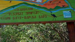 CARSKA BARA: Zaštićeni rezervat nedaleko od Zrenjanina čuva 239 vrsta ptica