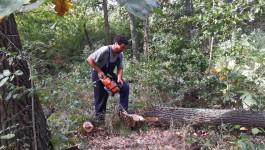 Raščišćavanje stabala koja mogu da ugroze dalekovode