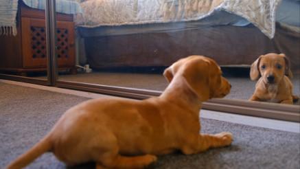 OPASNA BORBA: Ovoj pas je našao zanimljivog drugara