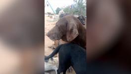 BEZDUŠNO I STRAVIČNO: Snimak iz azila za pse (UPOZORENJE - uznemirujući sadržaj)