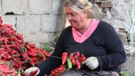 KAD SE CELO SELO ZACRVENI: Donja Lokošnica je svetska prestonica posebne vrste paprika